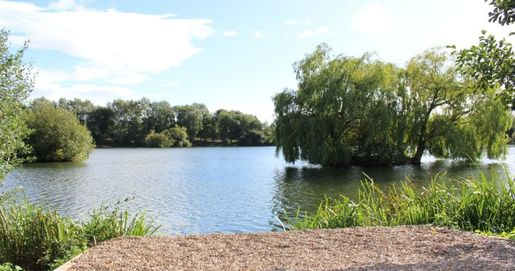 Seighford Lakes photo with rippling water in the background, weeping willows, reeds and blue skies